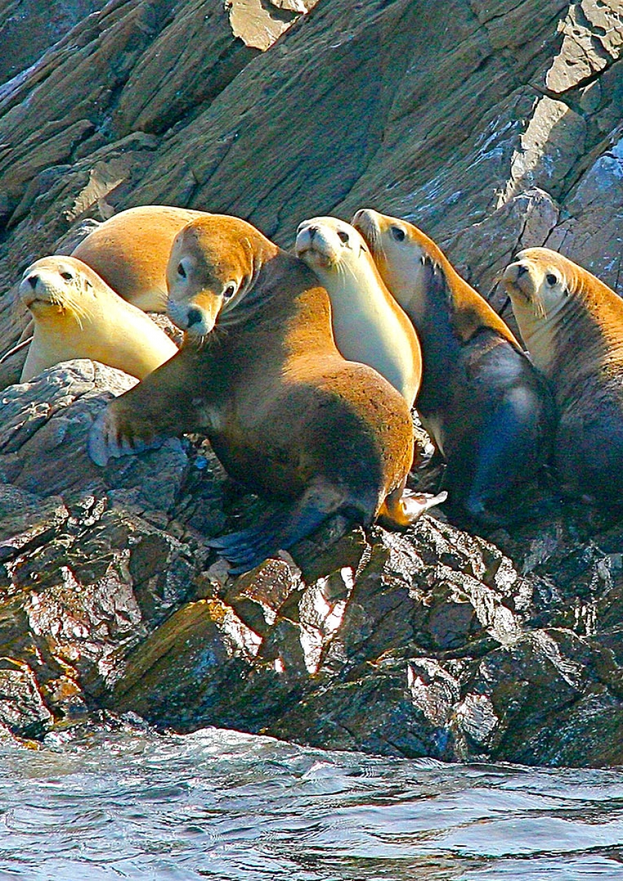 Seals on Kangaroo Island Marine Tour